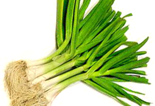 Spring-Garlic3