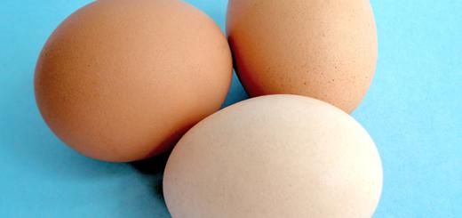 Egg-Facts-Unscrambled