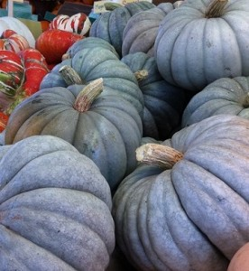 jarrahdale pumpkins_sm