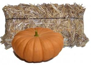 long-island-pumpkin