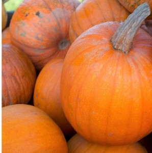 oz pumpkins
