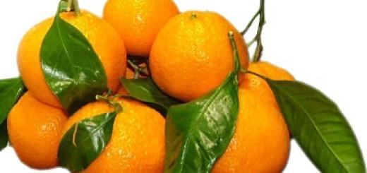 Satsuma Mandarin pile