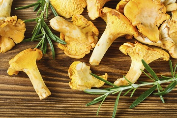 Yellow chanterelles on wooden table